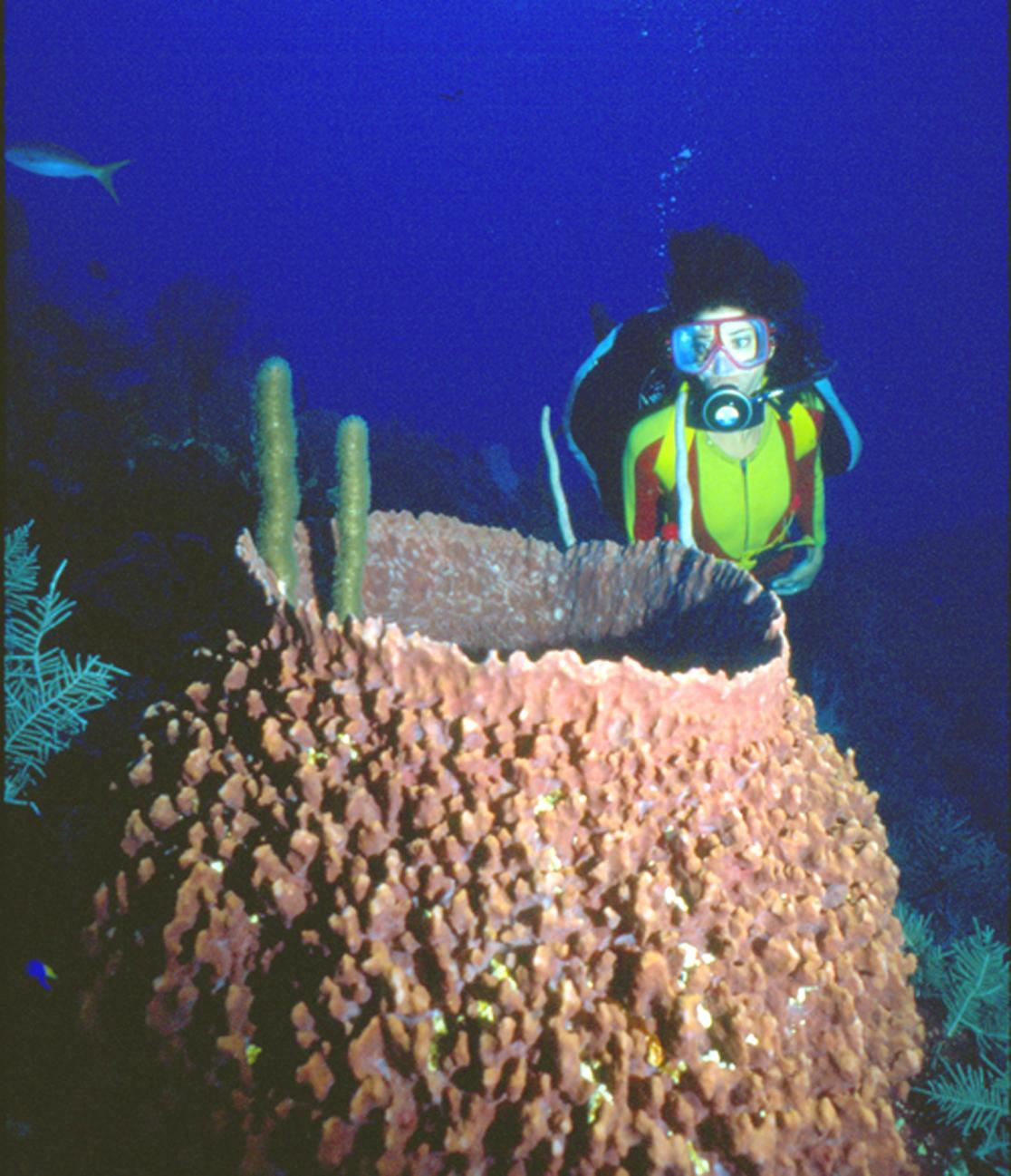 Diver with a basket sponge